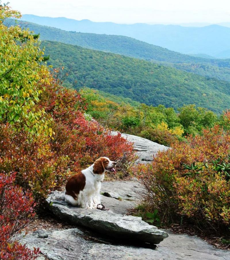 Morgan at Grandfather Mtn. North Carolina October 2014